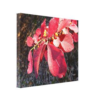 Impressão das canvas - folhas do rubi
