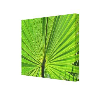 Impressão das canvas - fronda da palma