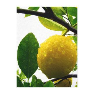 Impressão das canvas - limão na chuva impressão em tela