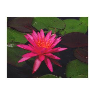 Impressão das canvas - lírio de água cor-de-rosa impressão em tela
