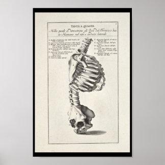 Impressão de esqueleto da arte da espinha da