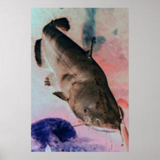 Impressão do poster da foto do peixe-gato
