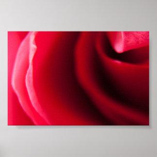 Impressão do poster da fotografia do rosa do rosa