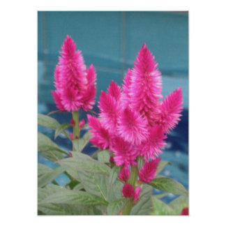 Impressão do poster de Fuschia Botanicals