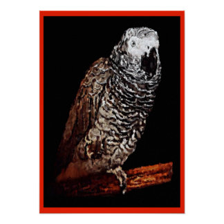 Impressão do poster do papagaio do cinza africano