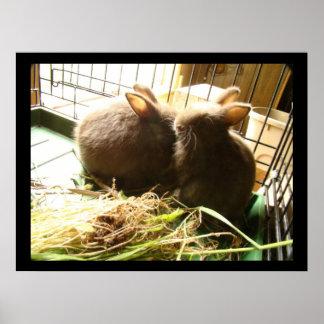 Impressão dos coelhos do bebê