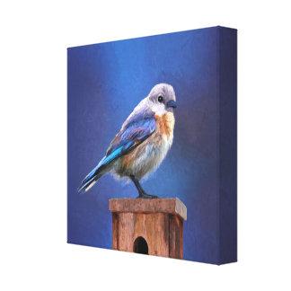 Impressão Em Canvas Bluebird (fêmea)