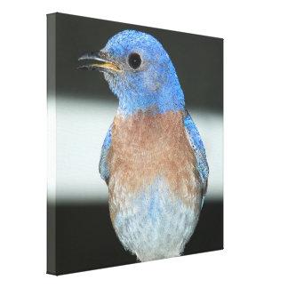 Impressão Em Canvas Bluebird ocidental