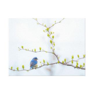 Impressão Em Canvas Bluebird oriental do pássaro animal
