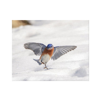Impressão Em Canvas dança oriental do Bluebird 14x11 na neve