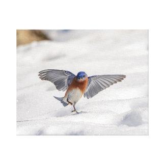 Impressão Em Canvas dança oriental do Bluebird 20x16 na neve