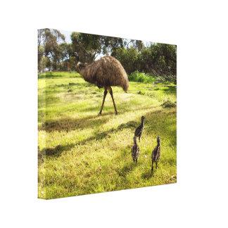 Impressão Em Canvas Emus do pai e do bebê que vão para uma caminhada,