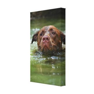 Impressão Em Canvas Filhote de cachorro do poço do laboratório do