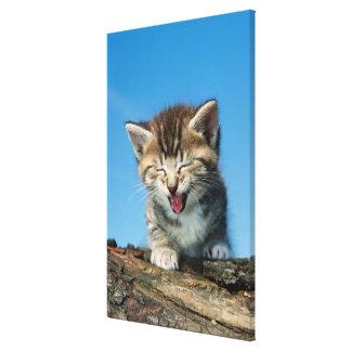Impressão Em Canvas Gatinho pequeno em uma árvore
