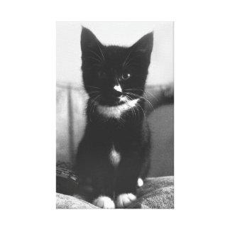 Impressão Em Canvas Gatinho preto e branco
