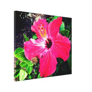 Impressão Em Canvas Hibiscus vermelho vibrante na luz solar