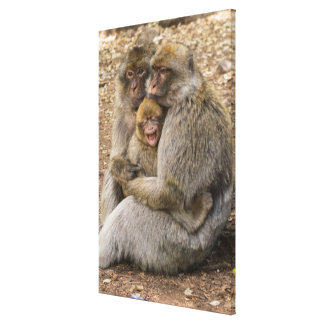 Impressão Em Canvas Macacos e bebê de Macaque