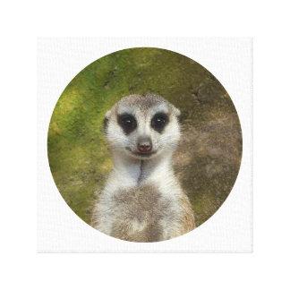 Impressão Em Canvas Meerkat engraçado 002 02 rd