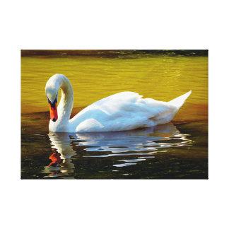 Impressão Em Canvas O branco nadou a natação no lago no outono