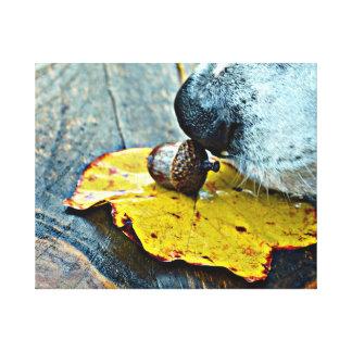 Impressão Em Canvas O cheiro da bolota Sniffing do cão do outono