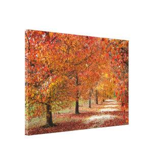 Impressão Em Canvas Paisagem do caminho do outono