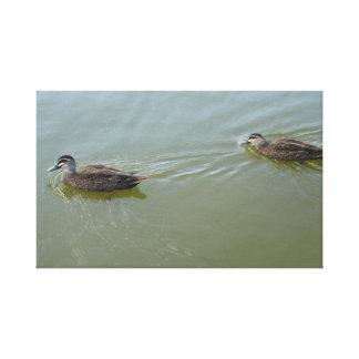 Impressão Em Canvas Patos que nadam