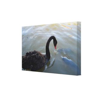 Impressão Em Canvas Peixes gigantes que tentam atacar a cisne preta,