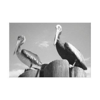 Impressão Em Canvas Pelicanos preto e branco