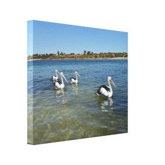 Impressão Em Canvas Pelicanos que nadam no oceano,