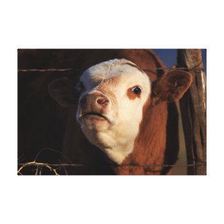 Impressão Em Tela Arte engraçada da vaca