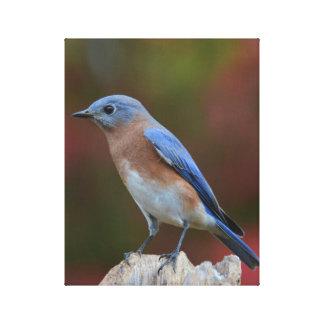 Impressão Em Tela Belas artes do Bluebird