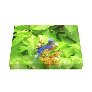 Impressão Em Tela Bluebird na conversão do Lilac