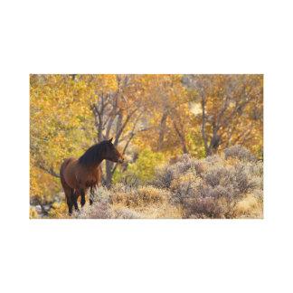 Impressão Em Tela Cavalo do mustang entre cores do outono