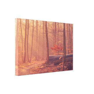 Impressão Em Tela Cenário da floresta na luz solar da manhã