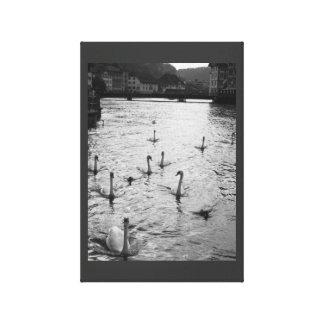 Impressão Em Tela Cisnes preto e branco