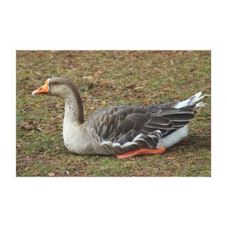 Impressão Em Tela Cruz do ganso da cisne do pato bravo europeu