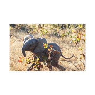 Impressão Em Tela Elefante do bebê