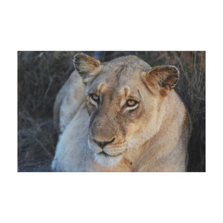 Impressão Em Tela Fim-acima do leão