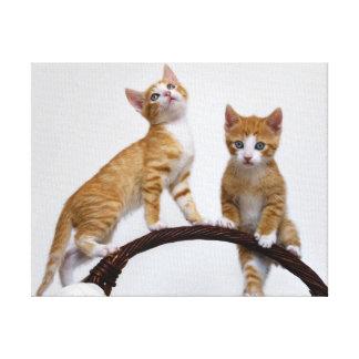 Impressão Em Tela Foto engraçada do Gym dos gatinhos bonitos dos