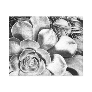 Impressão Em Tela Foto preto e branco do succulent