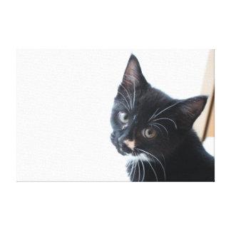 Impressão Em Tela Gatinho preto e branco