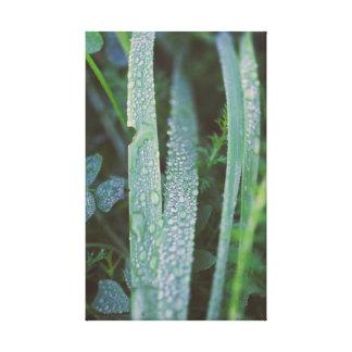 Impressão Em Tela Gotas de orvalho na grama