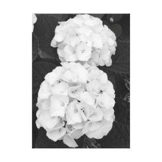 Impressão Em Tela Hydrangeas preto & branco