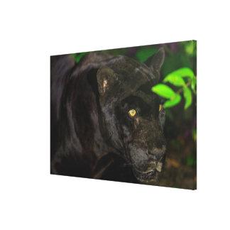Impressão Em Tela Jaguar preto que Prowling