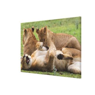 Impressão Em Tela Jogo dos clubes de leão