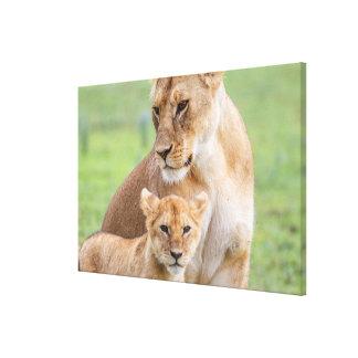 Impressão Em Tela Leoa e leão Cub