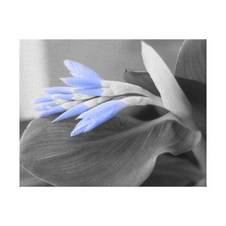 Impressão Em Tela Luz - o azul brota a cor seletiva