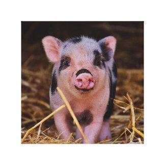 Impressão Em Tela mini porco