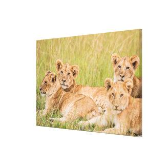 Impressão Em Tela Orgulho do leão Cubs