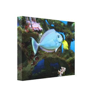 Impressão Em Tela Peixes do azul do mar